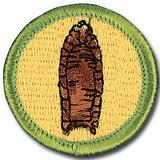 merit badge