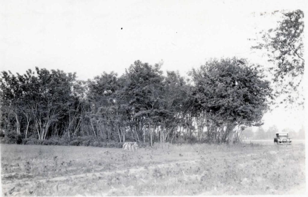 Dudley Burwell Blog Fairfield house site abt 1924